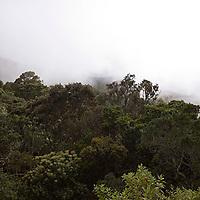 Cerro Avila con neblina, Galipán, Estado Vargas, Venezuela.