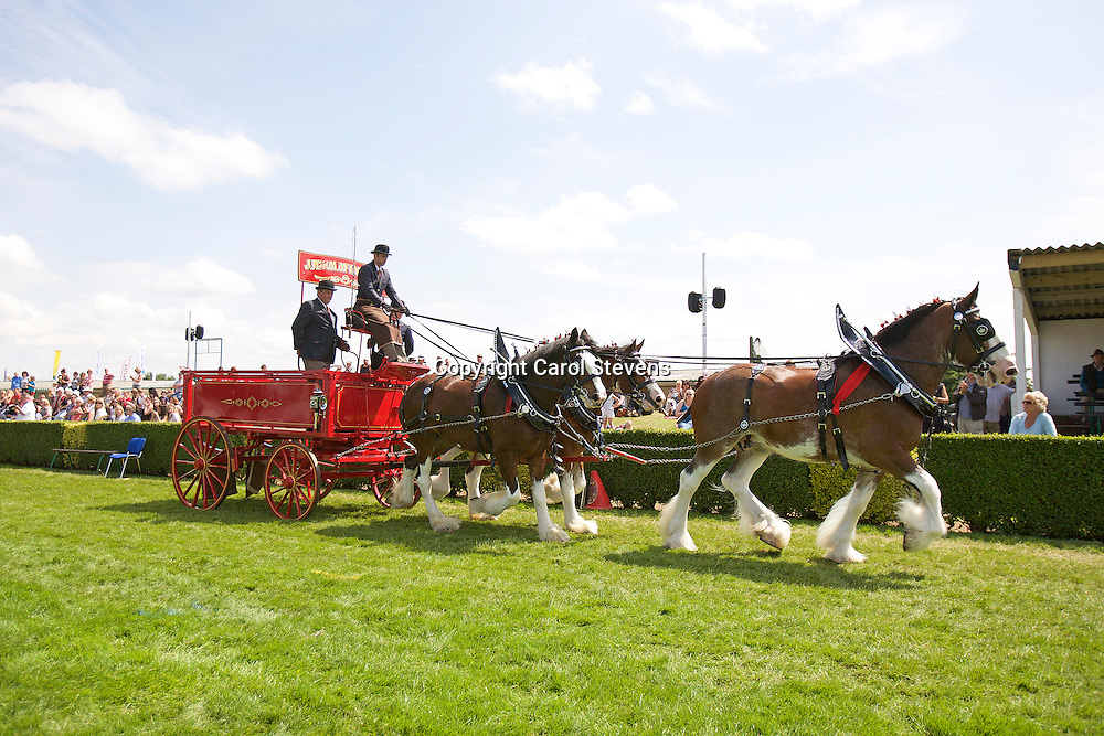 Great Yorkshire Show 2015  Heavy Horse Team Turnouts
