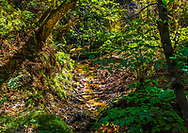 A magical forest stream in early fall