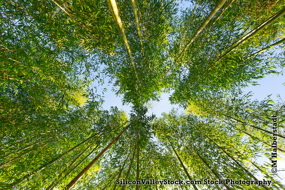 Bamboo Garden at Foothill College, Los Altos Hills, California