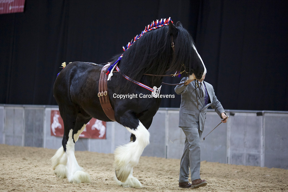 E A Sessions &amp; Sons' ROOKHILLS EMPEROR  f 2011  (No.54)<br />
