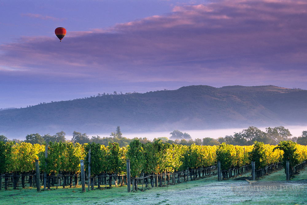 Hot air balloon and clouds at sunrise over vineyards near Oakville, Napa Valley, Napa County, California