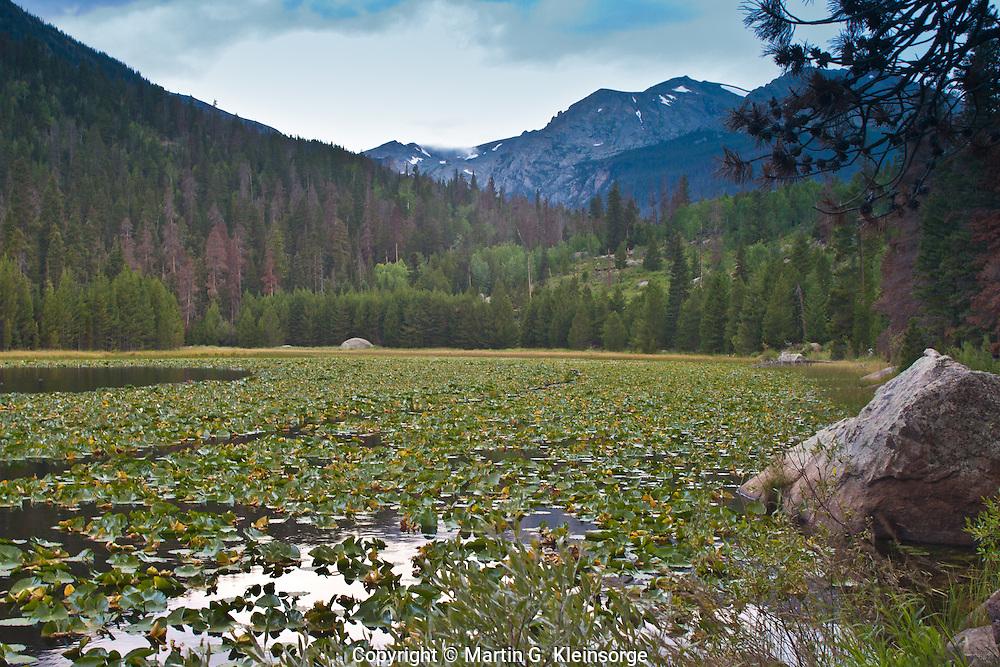 Pond lilies in Cub Lake below 12,928 ft. Stones Peak.  Rocky Mountain National Park, Colorado.