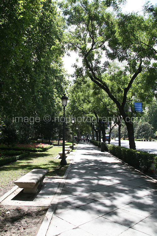 Tree-lined street in Madrid Spain