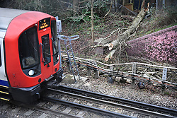 © Licensed to London News Pictures. 03/01/2018. London, UK. A tree fallen on the tracks at Ickenham Station in London, causing severe delays on the Metropolitan line. Photo credit: Ben Cawthra/LNP