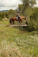 Trail Riding, crossing bridge, Quarter Horse, Montana, MODEL RELEASED, PROPERTY RELEASED