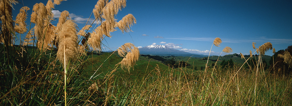 A summer scene showing Mount Ruapehu, an active stratovolcano at the southern end of the Taupo Volcanic Zone, 40 kilometres southwest of the southern shore of Lake Taupo, in Tongariro National Park. North Island,  <br /> Ruapehu is one of the world's most active volcanoes and the largest active volcano in New Zealand. It is the highest point in the North Island and includes three major peaks: Tahurangi (2,797 m), Te Heuheu (2,755 m) and Paretetaitonga (2,751 m). The deep, active crater is between the peaks and fills with a crater lake between major eruptions. Mount Ruapehu, North Island, New Zealand. Photo Tim Clayton