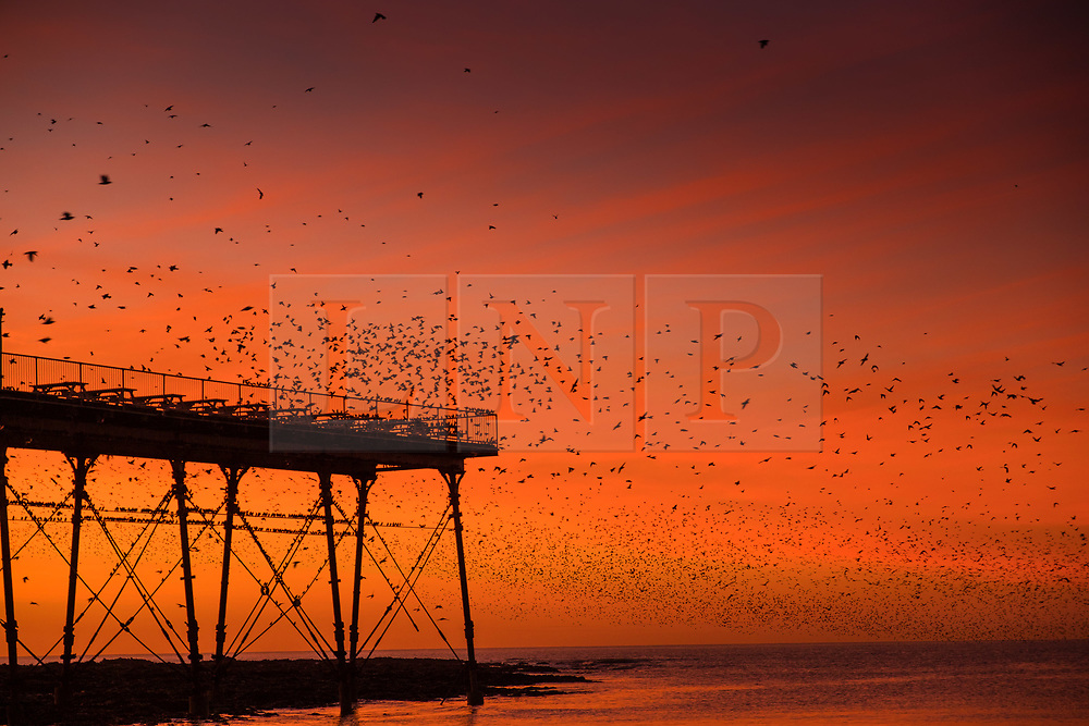 Aberystwyth Wales UK, Monday 18  December 2017<br /> <br /> UK Weather:   As the sun sets in a dramatic flaming red sky on a bright cold December evening in Aberystwyth, Wales,  tens of thousands of starlings descend to settle in chattering masses on the cast iron legs of the town's Victorian era  seaside pier. The birds huddle tightly together for warmth ,  safety and overnight companionship , and look like dark leaves clothing the forest of girders and beams under the floors of the pier.   <br /> <br /> <br /> <br /> <br /> photo © Keith Morris