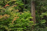 Fall foliage North Cascades