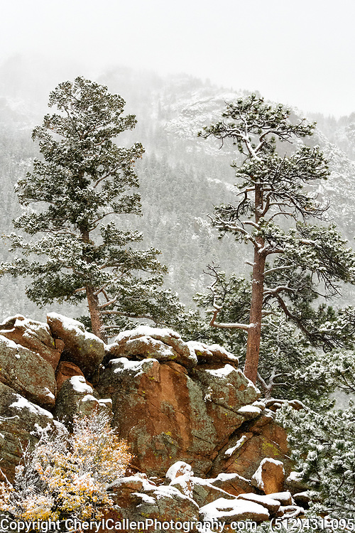 A fresh snow dusting in Rocky Mountain National Park