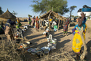 The Breidjing Refugee Camp, Eastern Chad on the Sudanese border shelters 30,000 people who have fled their homes in Darfur, Sudan. Food is distributed free of charge by the United Nations WFP (World Food Program). Here women line up to get their ration of grain ground into meal at a portable diesel powered mill operated by a local entrepreneur who is paid with a small percentage of the grain. (Supporting image from the project Hungry Planet: What the World Eats.)