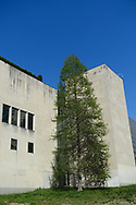 Bald Cypress tree on the south wall of the Metropolitan Museum of Art in Central Park.