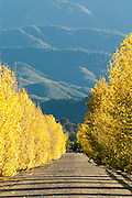 Fall Colors in Santa Ynez Valley California