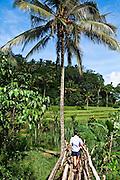 Rice paddes with views of Gunung Agung. Bali