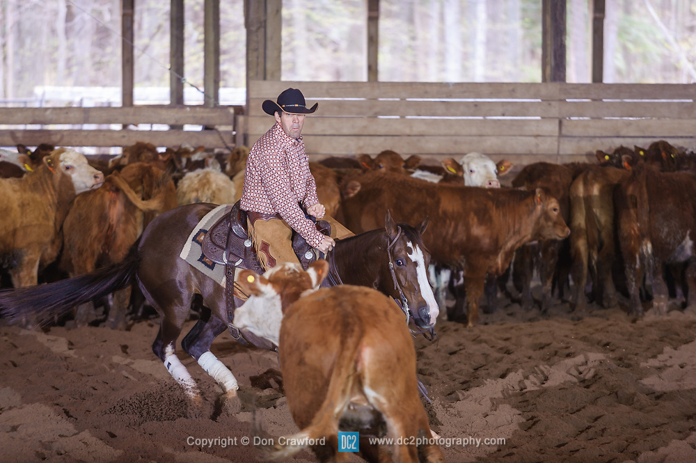 April 29 2017 - Minshall Farm Cutting 1, held at Minshall Farms, Hillsburgh Ontario. The event was put on by the Ontario Cutting Horse Association. Riding in the Non-Pro Class is Ron Stelzl on Scarlet Catdancer owned by the rider.