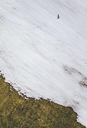 THEMENBILD - Skifahrer auf einer Piste mit grüner Wiese, aufgenommen am 28. Maerz 2019 in Kaprun, Oesterreich // Skier on a slope with green meadow in Kaprun, Austria on 2019/03/28. EXPA Pictures © 2019, PhotoCredit: EXPA/ JFK