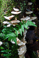 Mushrooms, ferns and moss growing on a tree.