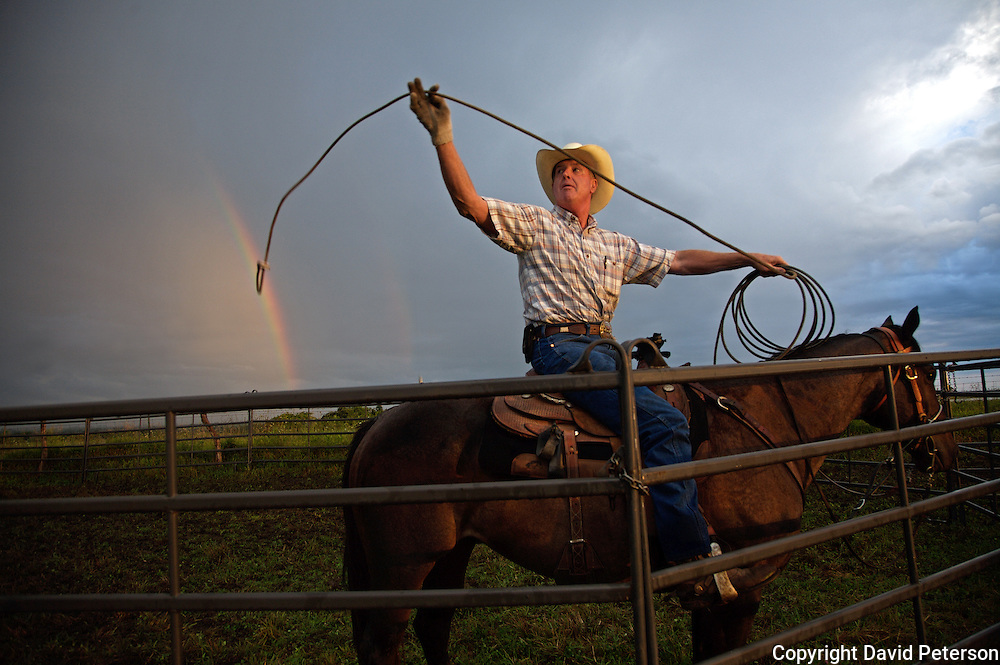 As a rainbow appears on the horizon, Steve Taylor readies his lariat while waiting for cattle to be herded into a corral at the Bar B ranch near Albia, Iowa.  Calves were rounded up and roped for bi-annual vaccinations, branding, the implant of growth stimulants, and in some cases, castration.  After a morning rain, muddy conditions made the task more difficult.  Ranch owner Catherine Bay runs the operation with a herd of over 2,000 cattle.