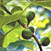 Cover, Edible Toronto Summer 2009