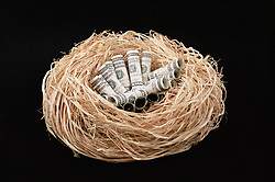 Dec. 14, 2012 - Dollars in a nest (Credit Image: © Image Source/ZUMAPRESS.com)