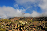 Fog weaves it's way through the Tucson Mountains in the Sonoran Desert, Tucson, Arizona, USA.