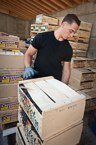 John Catalano moving merlot grapes into A&S