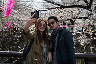 Tourists take a selfie in front of cherry blossom in full bloom at Nakameguro in Tokyo on April 3rd. The cherry blossom season in Japan kicks off boozy parties across the country and draws tourists from far and wide. 03/04/2017-Tokyo, JAPAN