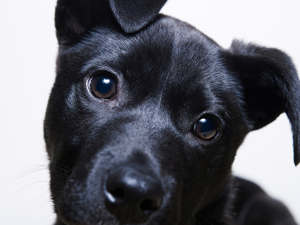 Studio portrait of mixed breed puppy looking at camera
