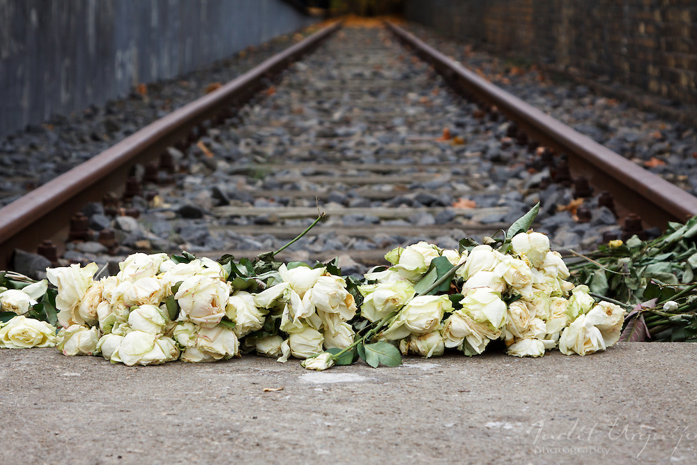 A reminder of white roses
