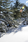 Bright sunshine and smooth drifts of fresh snow under spruce trees in Acadia National Park, Maine.