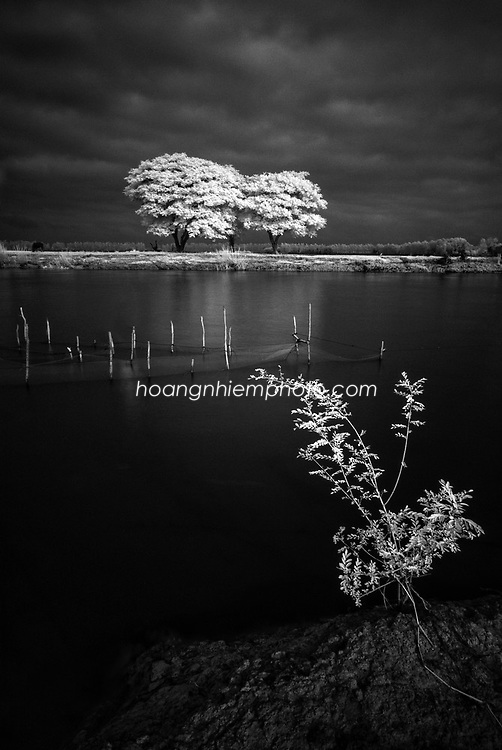 Vietnam Images-Fine art-Tree-Mekong delta hoàng thế nhiệm