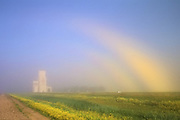 fogbow and grain elevator<br />