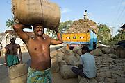 Rice Harvest season. Bringing in supplies of jute bags for bagging the rice. Tamil Nadu.
