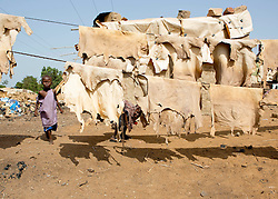 © Licensed to London News Pictures. 25/06/2013. Bamako,  Mali.  A young Malian child peaks through drying animal skins that will be used to produce leather goods for the local market.  Despite the recent intervention by the French in Mali life in Bamako carries on as normal.  Largely unaffected by the conflict the residents of the city rely heavily on the produce from the local markets.  As one of the 25 poorest countries in the world Mali relies heavily on imported and self manufactured goods which are sold within these markets.     Photo credit: Alison Baskerville/LNP