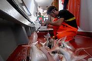 Anzio, Italy 25/06/2008: battuta di pesca con il peschereccio Stella d'Argento. Mimmo dall'Egitto, in Italia da 3 anni.