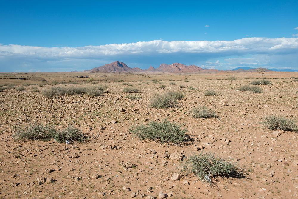Desert vegetation in the Namib desert, located in Namibia, Africa.