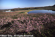 PA Landscapes, Apple Blossoms, Orchard Farm and Lake, Adams Co., Pennsylvania
