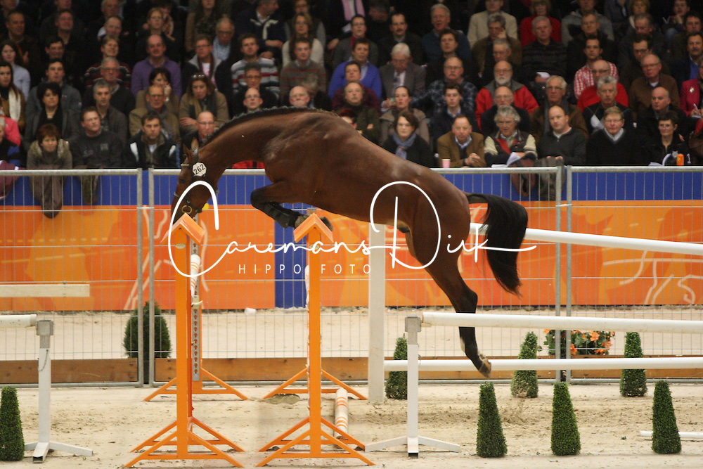 262 - Etuloun<br /> KWPN Hengstenkeuring - 's Hertogenbosch 2012<br /> © Hippo Foto - Wendy Scholten