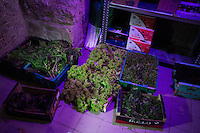 VALLETTA, MALTA - 7 DECEMBER 2015: Fresh salads are here in the cellar of Fresh Direct, one of the few fruit & vegetable stores that sells only the local harvest, in Valletta, Malta, on December 7th 2015. Malta has the highest overweight and obesity rates in the European Union, according to a report from the World Health Organisation.