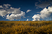 This view is several miles south of the Rosemont Mine and looks north toward the mine. Yellow flowers cover the foothills in the grasslands of Santa Rita Mountains in the autumn near Sonoita, Arizona, USA.