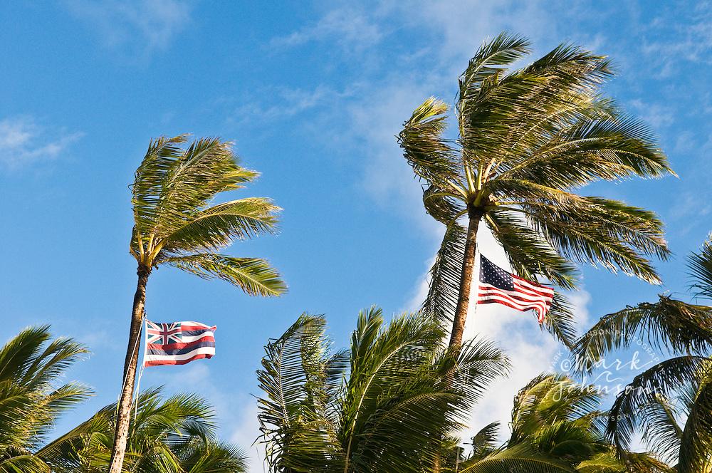 Hawaiian and American flags flying from coconut trees, Kailua, Oahu, Hawaii