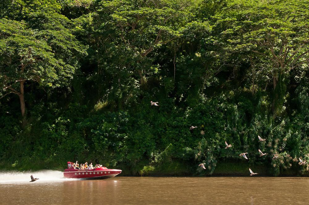 Sigatoka River Safari jetboat tour, Viti Levu Island, Fiji.