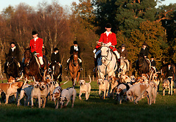 UK ENGLAND SURREY TILFORD 13NOV04 - A hunting party on horseback is surrounded by hounds as they return from a foxhunt near the village of Tilford in southern Surrey. On this particular hunt, no foxes were found. Foxhunting in rural Surrey with the Surrey Hunters Union, founded in 1798. ....jre/Photo by Jiri Rezac ....© Jiri Rezac 2004....Contact: +44 (0) 7050 110 417..Mobile:  +44 (0) 7801 337 683..Office:  +44 (0) 20 8968 9635....Email:   jiri@jirirezac.com..Web:    www.jirirezac.com....© All images Jiri Rezac 2004 - All rights reserved.