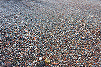 Old animal bones washed up along the Thames, London, UK.