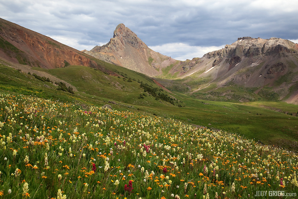 Wildflowers lie in a basin west of Wetterhorn Peak in the San Juan mountains.