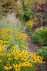 Rudbeckia fulgida var. deamii, crocosmia and cotinus in the brick garden at Glebe Cottage in autumn