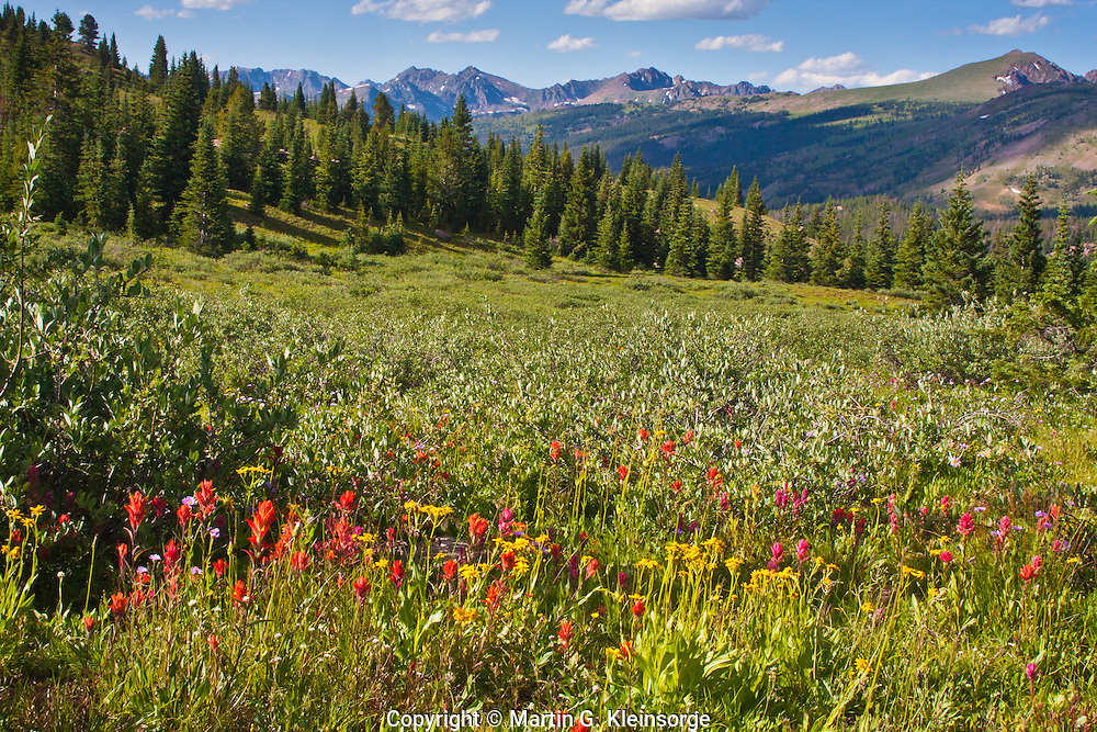 Scarlet Paintbrush on Shrine Pass, with the Gore Range in the distance.  Colorado.