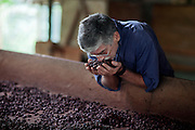 Claudio Corallo is feeling the aromas released from a handful of cocoa that is drying on a wood desiccator in the technical area of his plantation on the island of Principe, in Sao Tome and Principe, (STP) a former Portuguese colony in the Gulf of Guinea, West Africa.