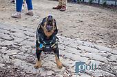 Barks and Brews at Elan City Center Dog Park