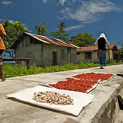 Spices drying on the main road of a west papuan village.